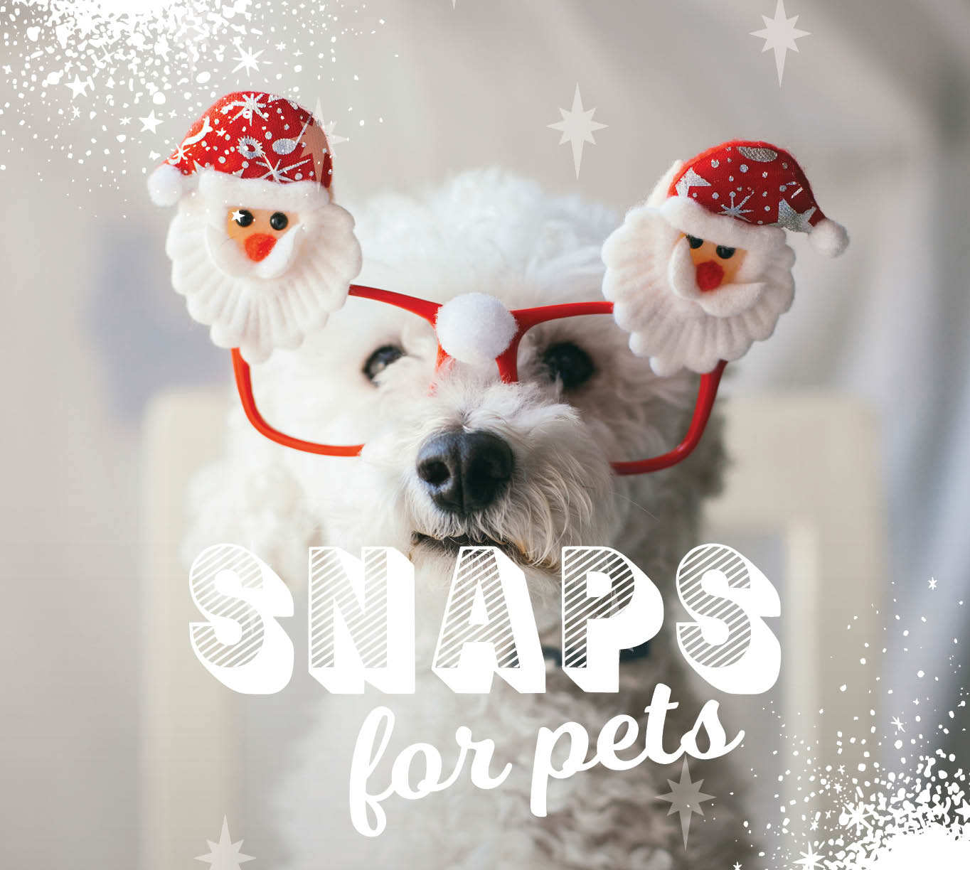 CH4806_Xmas 2019_Web Tiles_Snaps for pets_628x612px